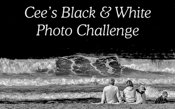 The Black And White Photo Challenge
