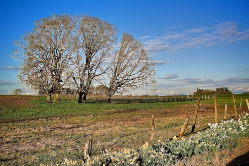 With the tree on the left your eye actually see the field beyond and the diagonal line of the little fence.