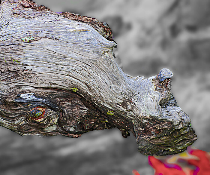 A piece of driftwood found on the beach with a little photoshop to make the red fire.