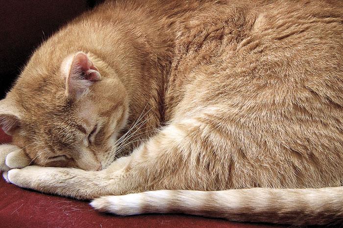 Watching a cat sleep is always serene.