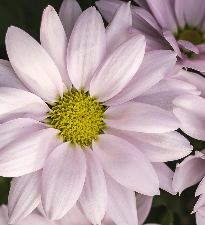 012215flower