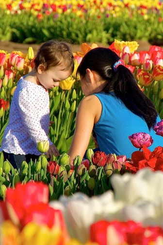 Tulip farm.  This photo is an expression of itself, but I could picture me being that  young child looking at the flowers.