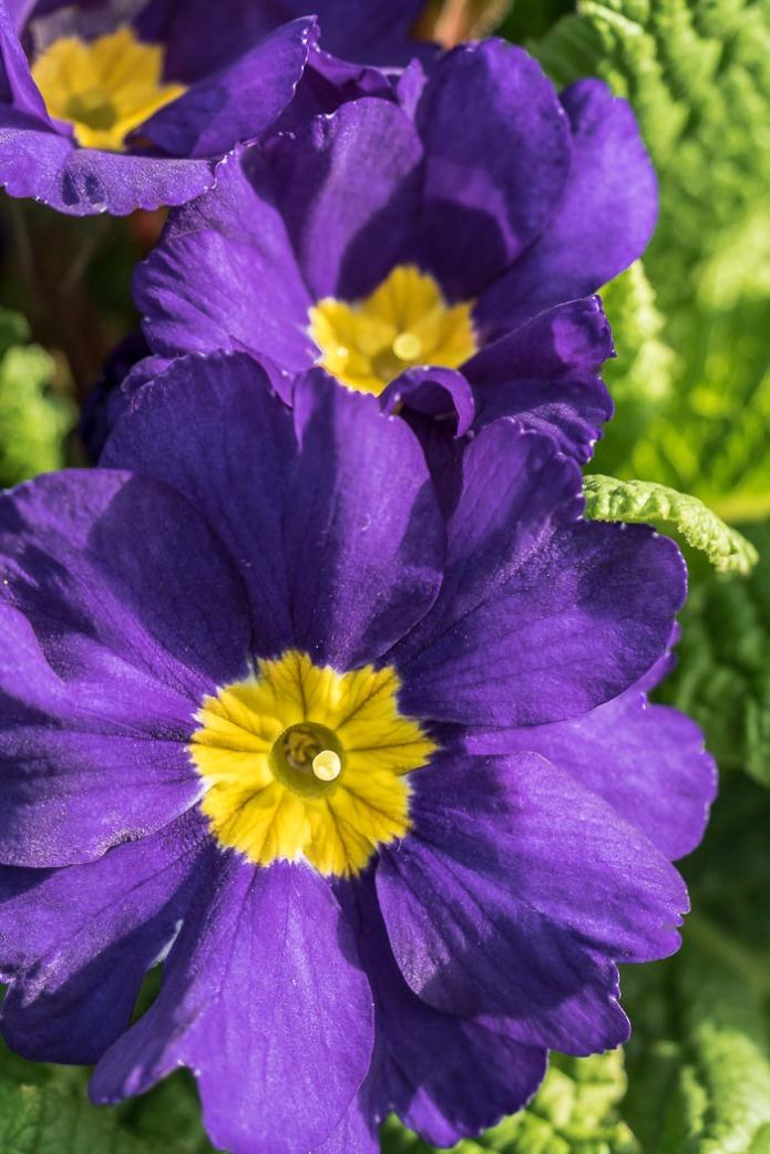 012415flower