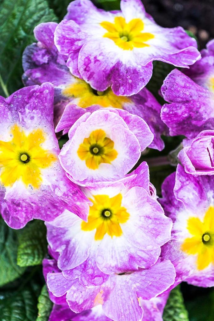 012615flower