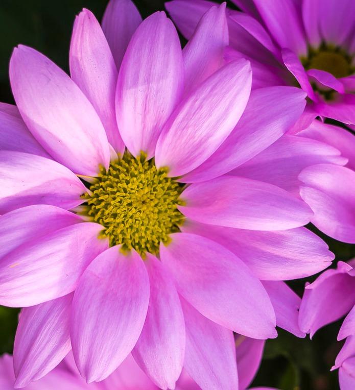 022615flower_1