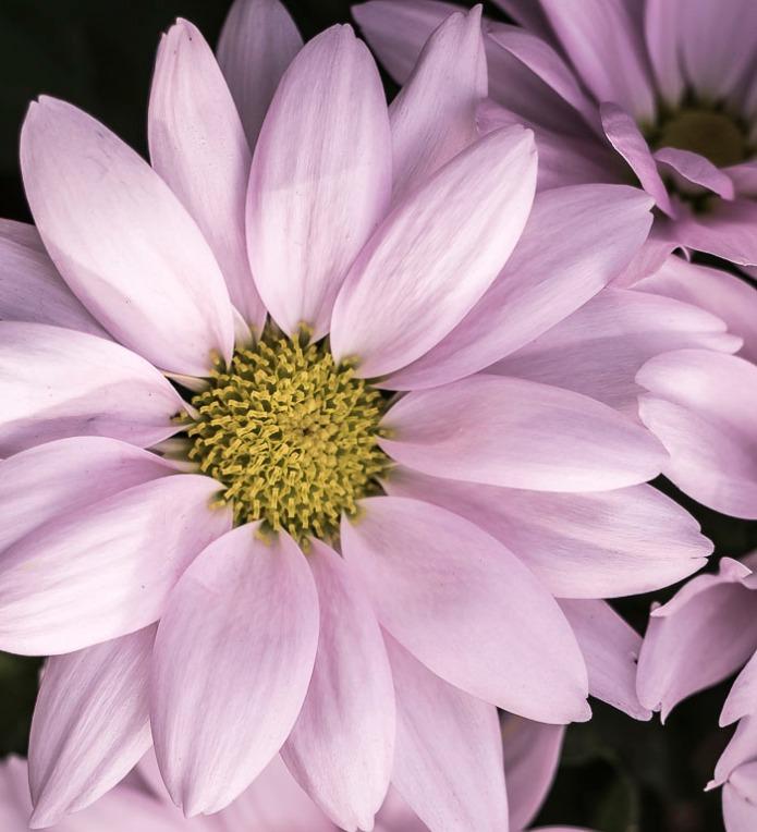 022615flower_2