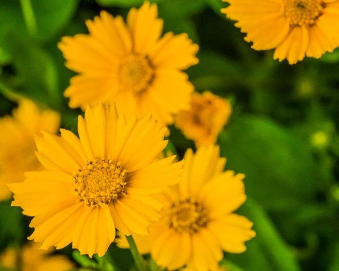 042215flower