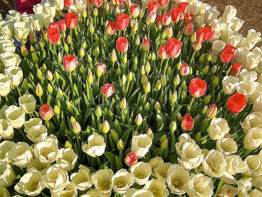042815flower
