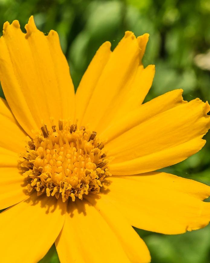 050115flower