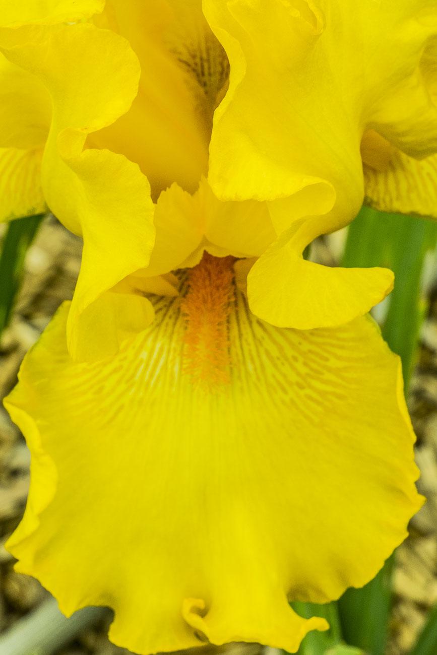 052815flower