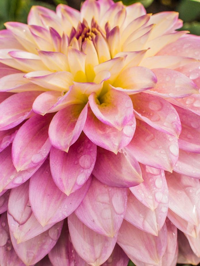 061015flower