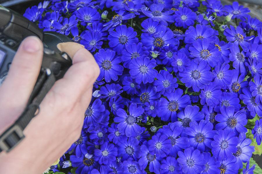 061415flower