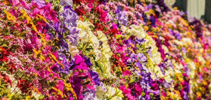 061615multi flower