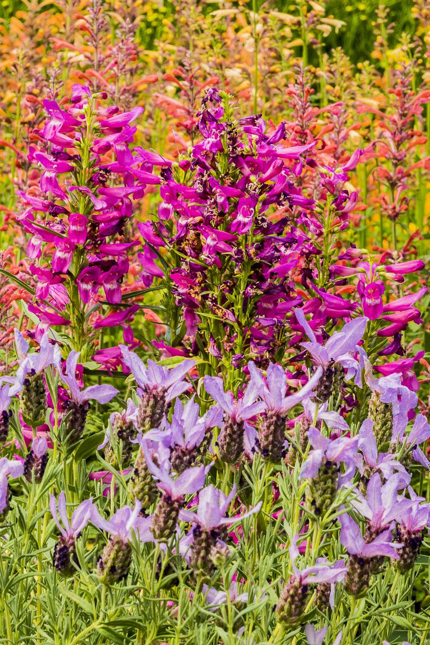 061615multi flower_1