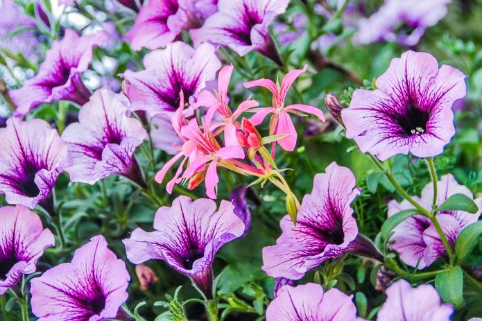 061615multi flower_2