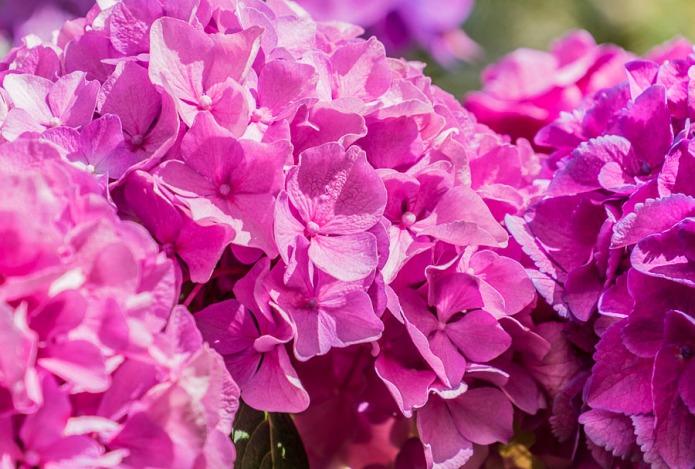 061815flower
