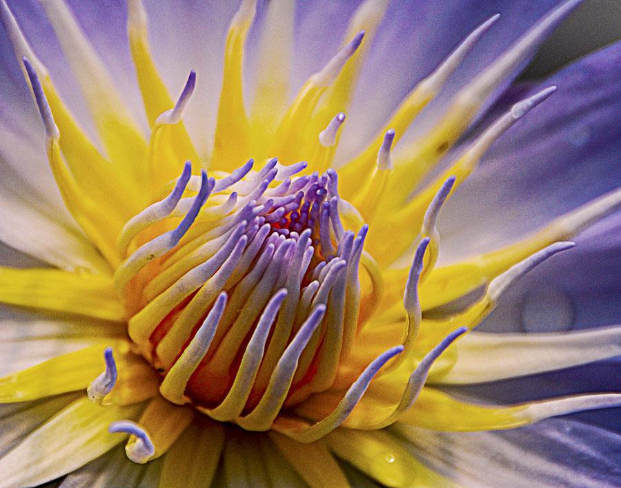 062615flower_1