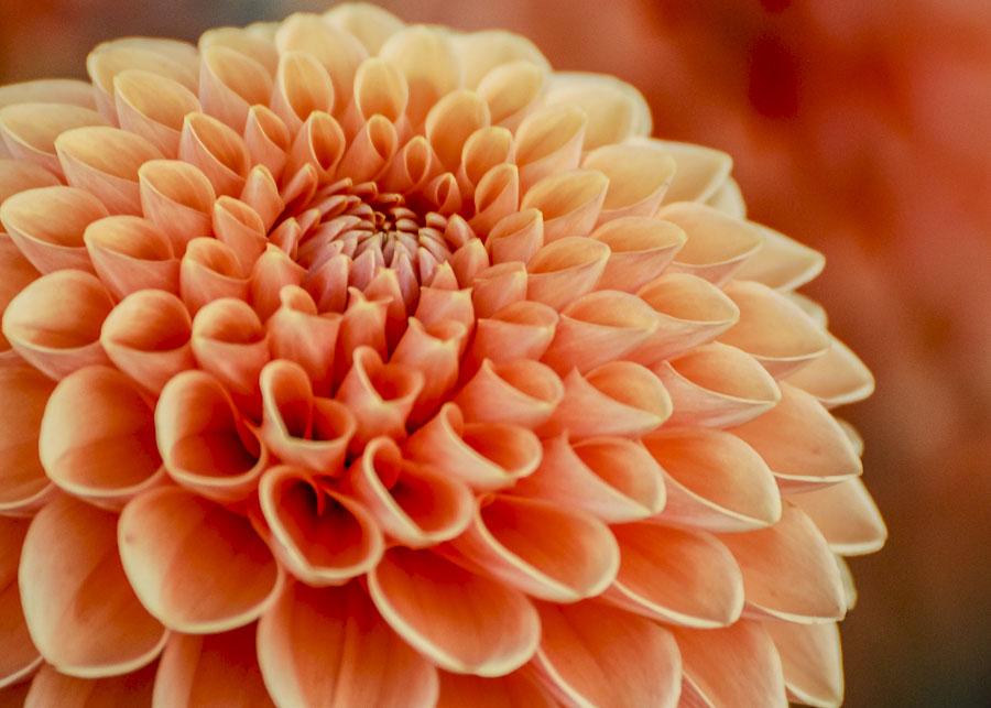 062615flower_2