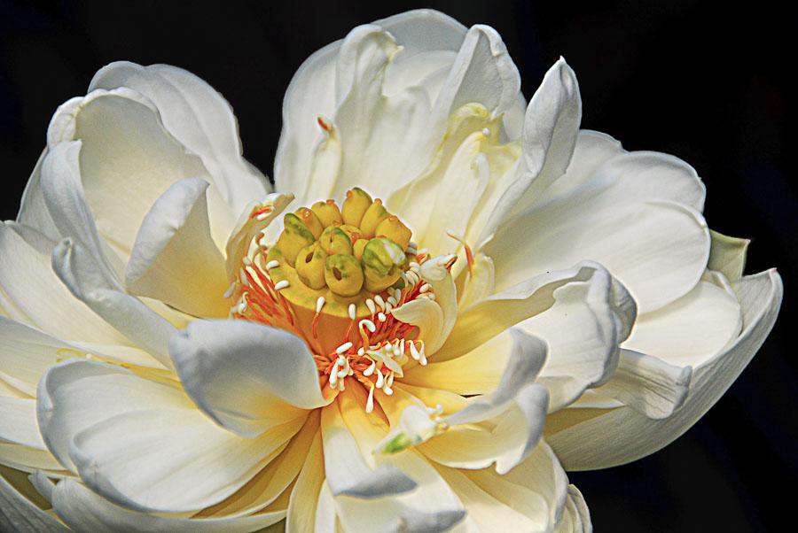 062615flower_4