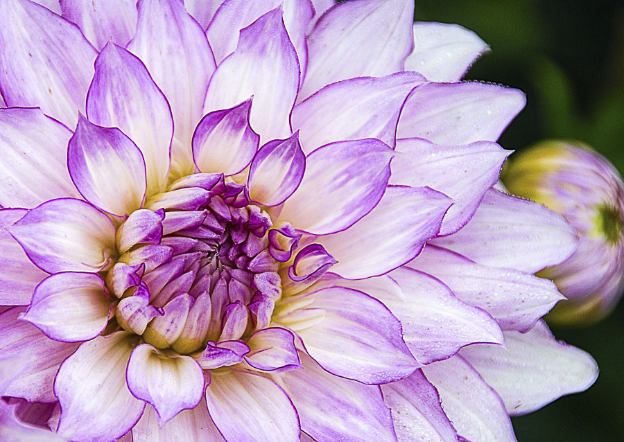 062615flower_5