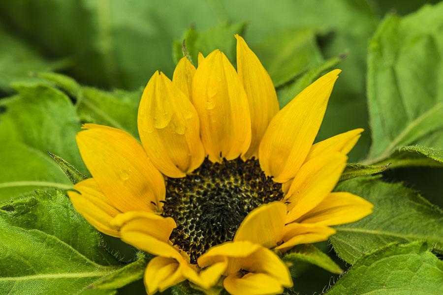 071315flower