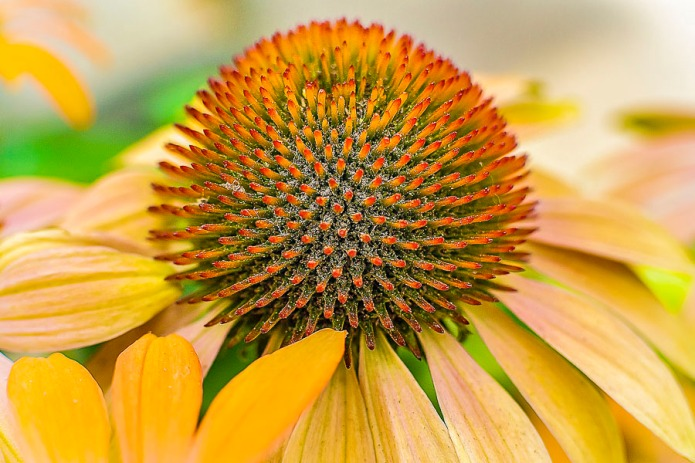 072115flower_8