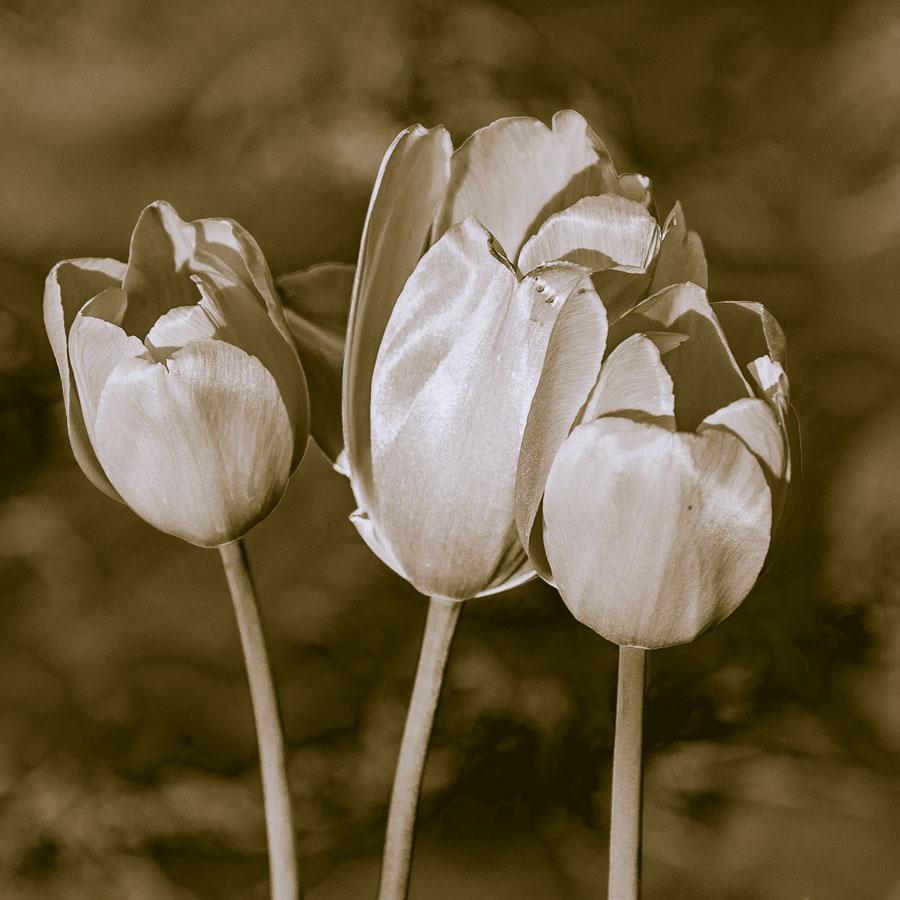 082015bw flower_3