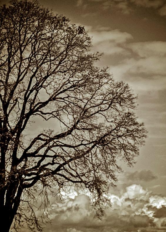 082615bw tree