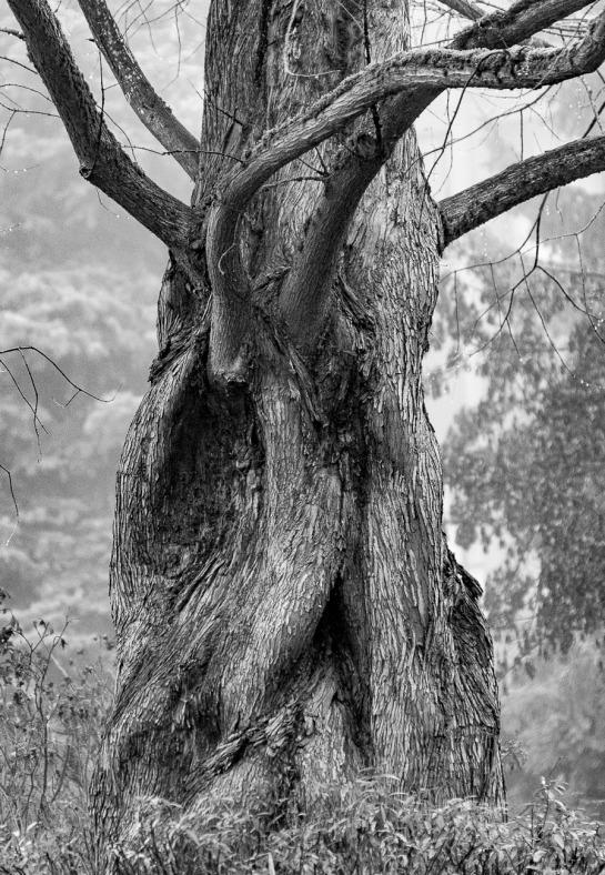 082615bw tree_1