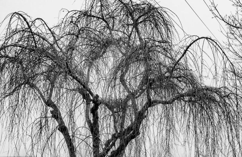 082615bw tree_2