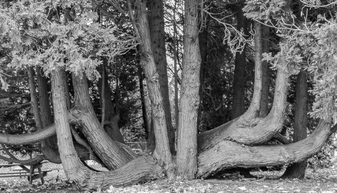 082615bw tree_3