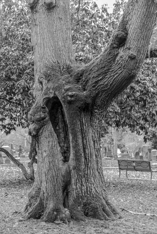 082615bw tree_4