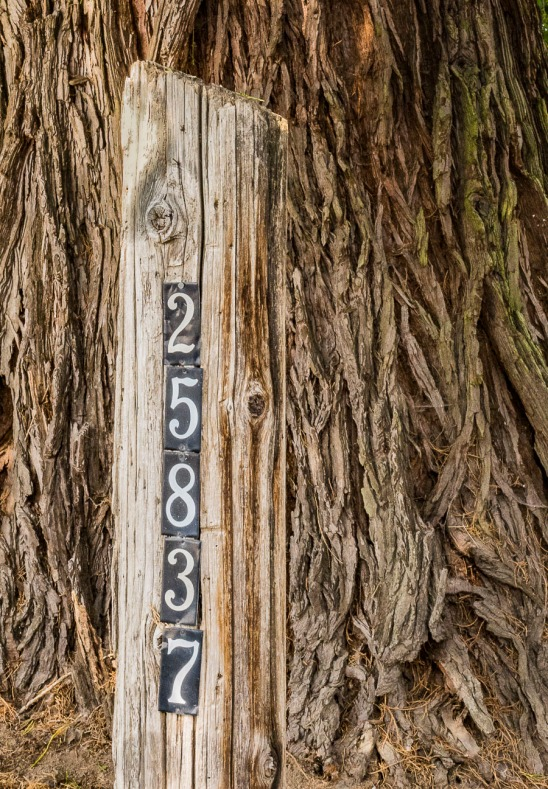 A tree trunk with a post in front of the tree for an address maker.