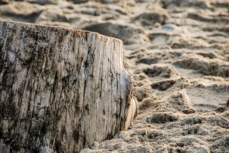Stump on the sand