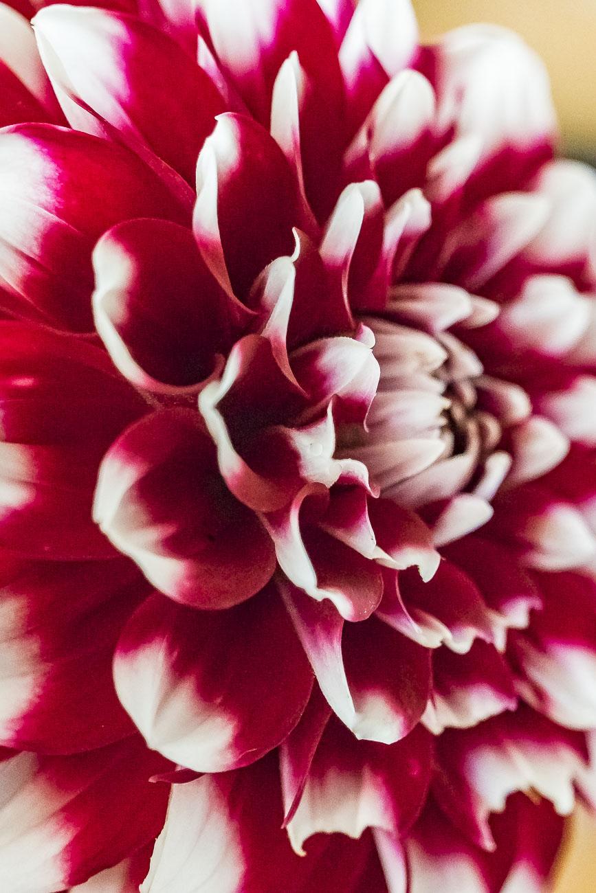 100115flower