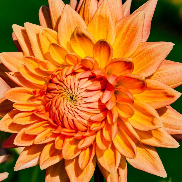 102115flower_4