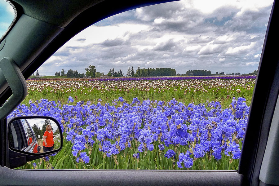 Chris took this photo of the iris fields. That is me in the rear view mirror.