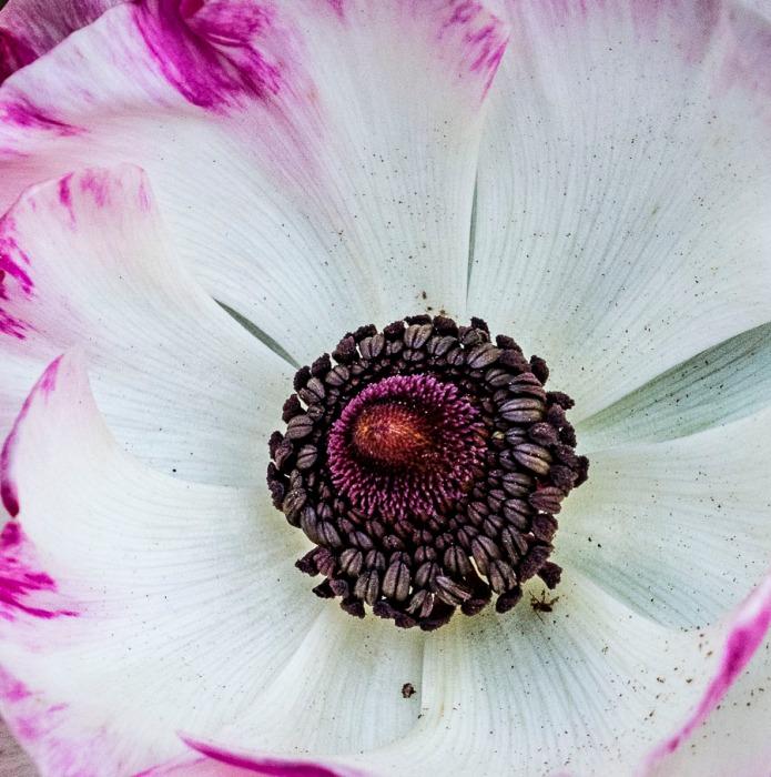 111815flower