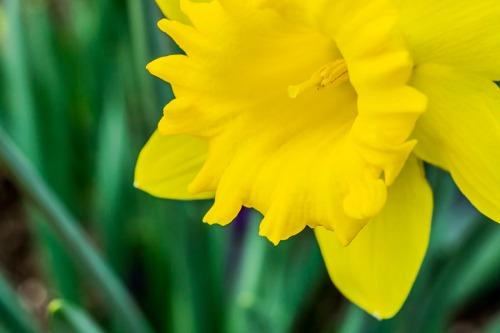 120615flower_5