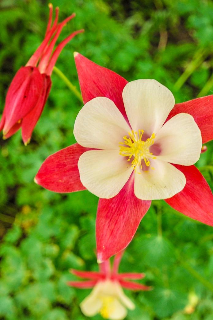 120815flower