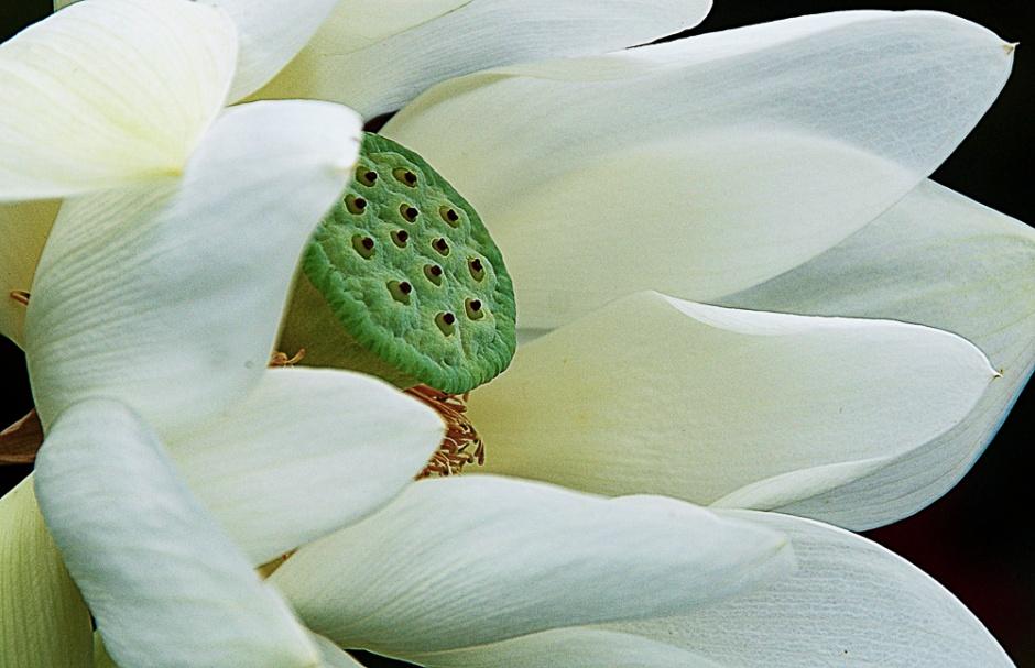 010516white flower_1