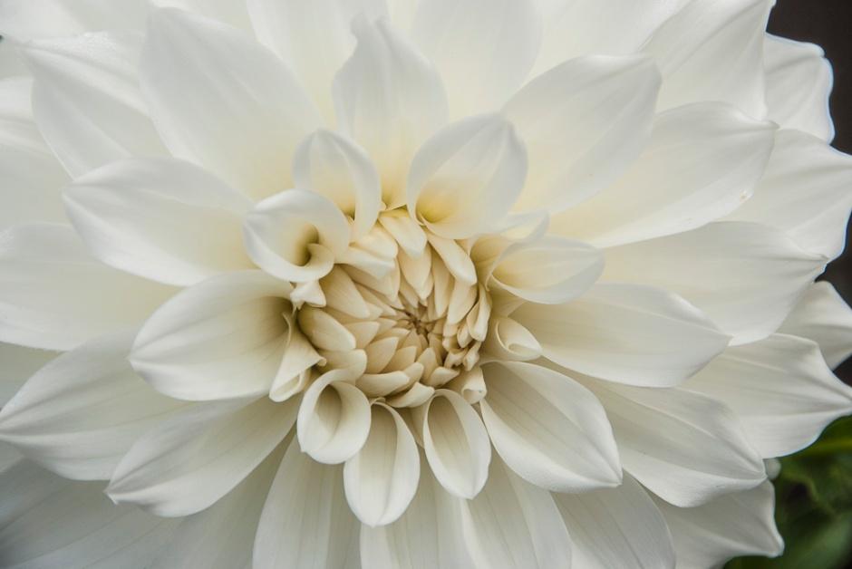 010516white flower_2