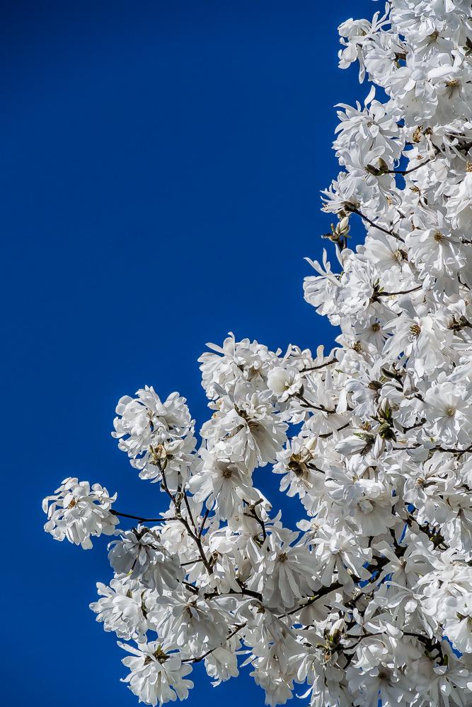 010516white flower_3