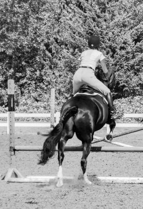 012516crop horse jump cropped