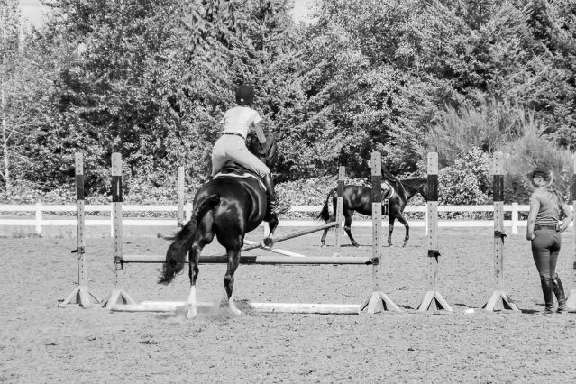 012516crop horse jump original