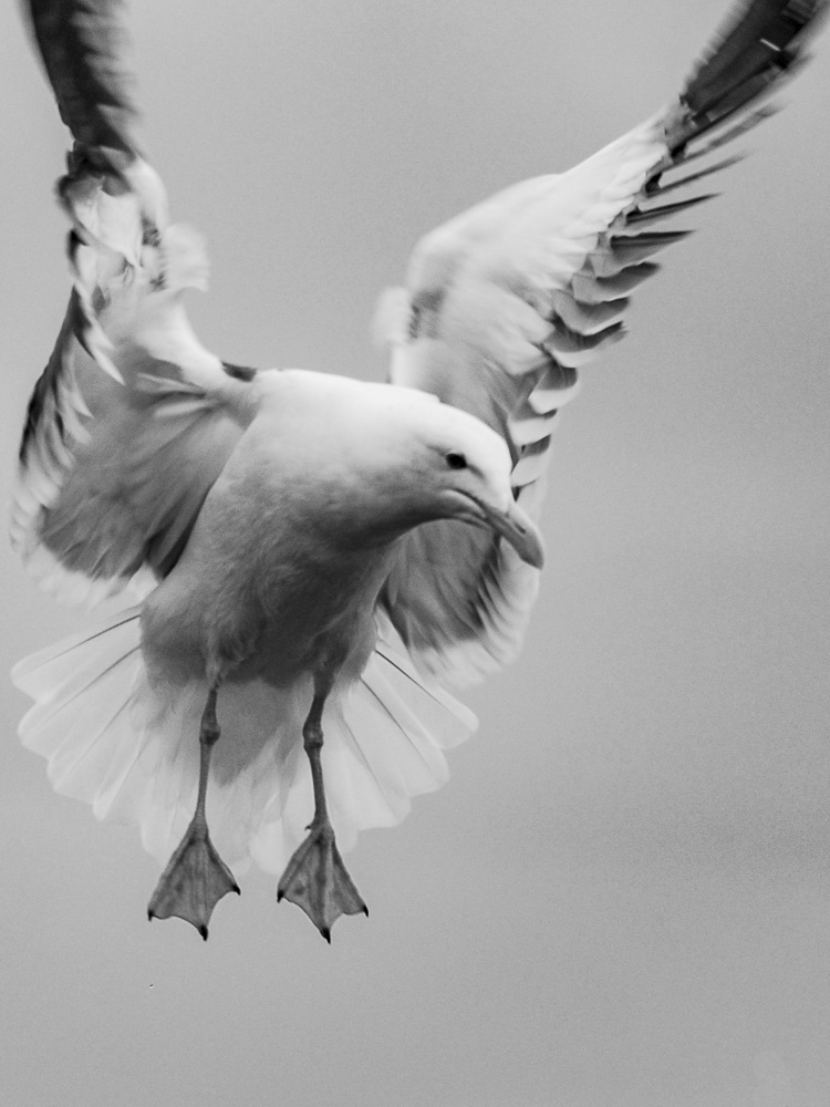 012616crop seagull