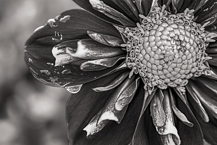022816flower