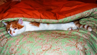 Charlie sleeping under the fold of our comforter.
