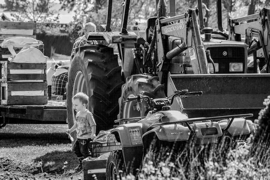 Swan Island is a family owned and operated company.  Here is one of the youngest in one of their fields a couple of years ago.  Don't fret anyone the workers were all on a break and there were plenty of adults around.  I count 3 or 4 in this photo alone.