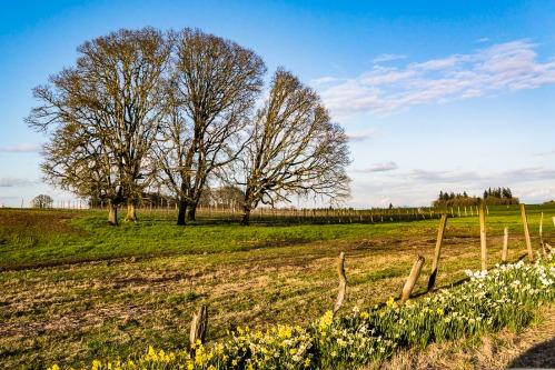 Near Wooden Shoe Tulip Farm, Woodburn, Oregon.